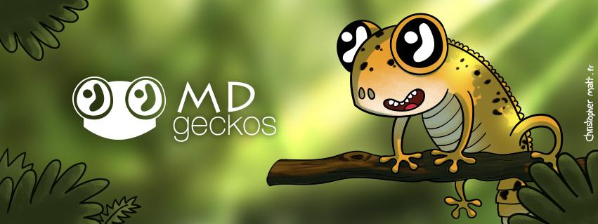Visuel pour MD Geckos